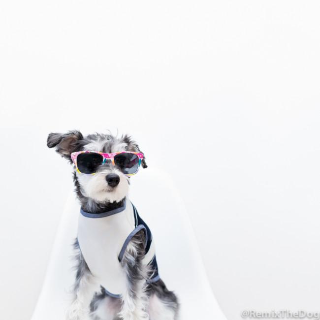 RemixTheDog -- Oh Pop Dog