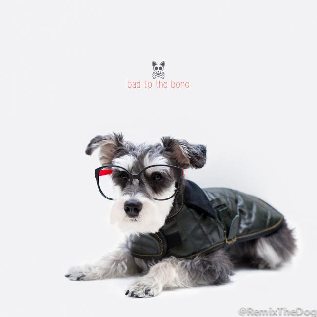 RemixTheDog-2-The-Leather-Dog-Co