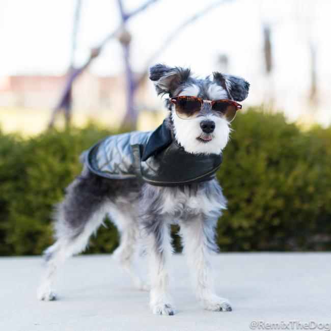 RemixTheDog-2-The Leather Dog Co