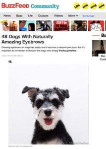 RemixTheDog - Buzzfeed Comm