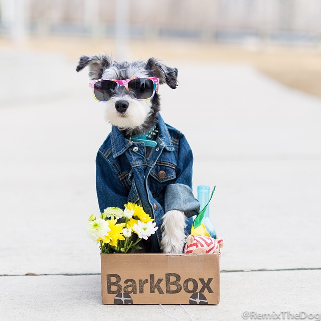 RemixTheDog - BarkBox Coupon Code 2