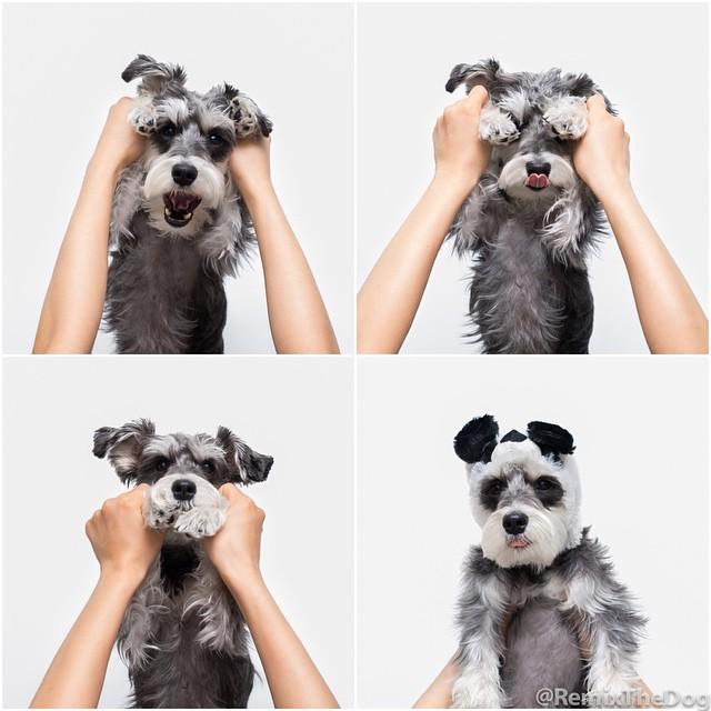 RemixTheDog - Dogly 2