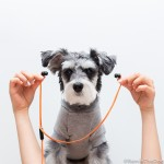 RemixTheDog - Sudio Klang Earphones