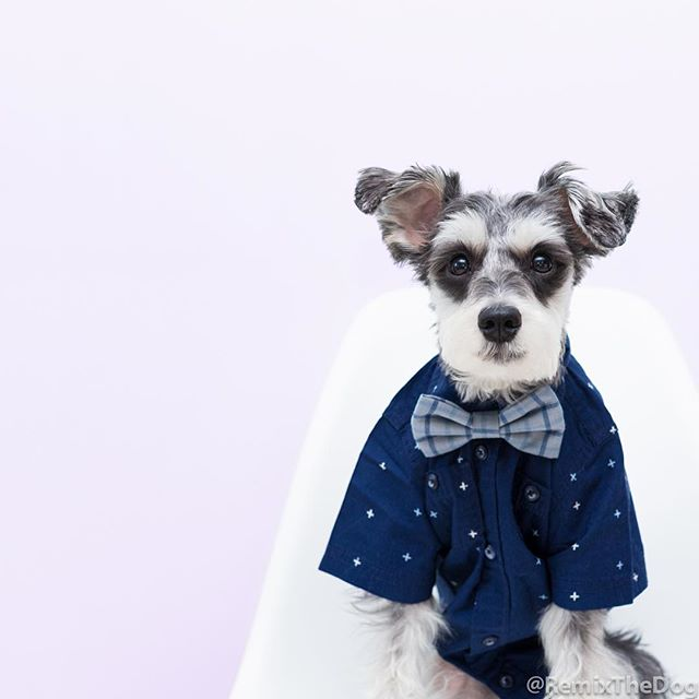 RemixTheDog - Brooklyn Bowtied