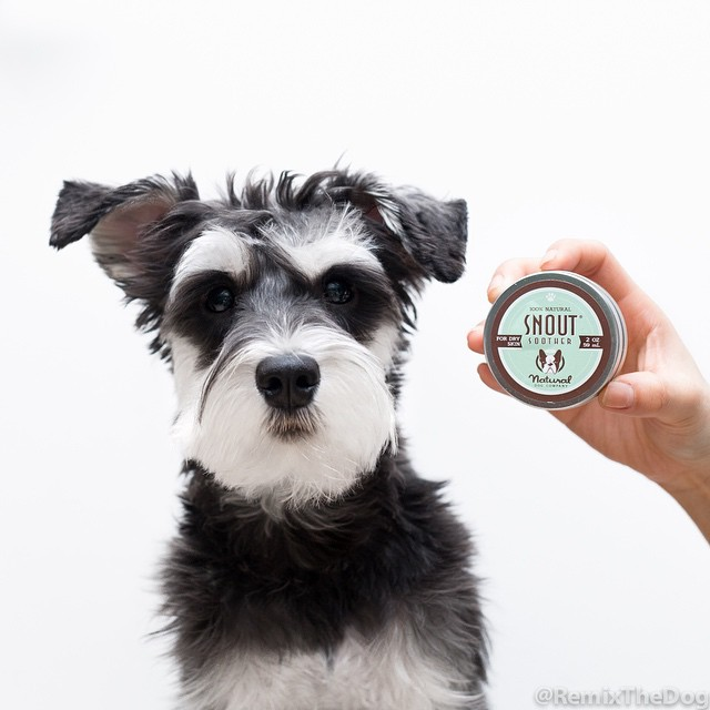 RemixTheDog - Natural Dog Company Review