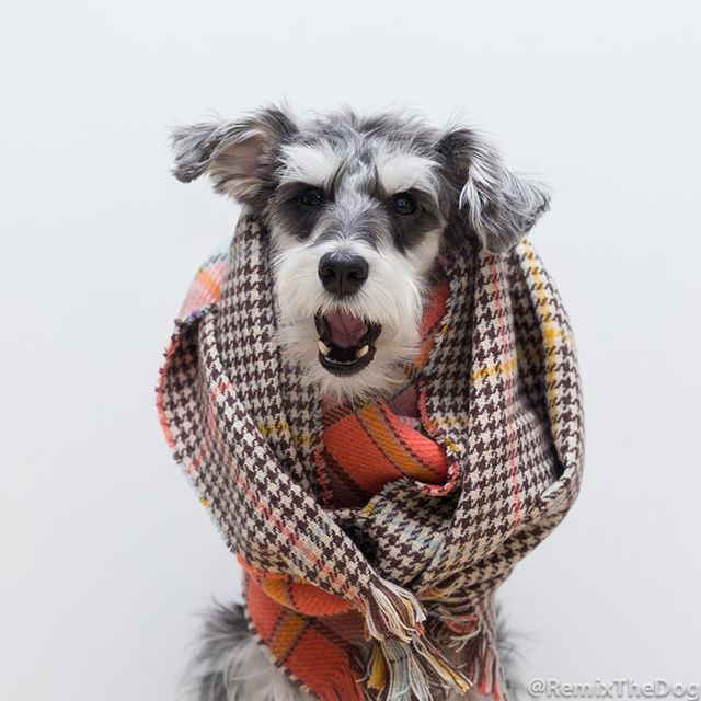 RemixTheDog - Happiness Boutique Scarf Review