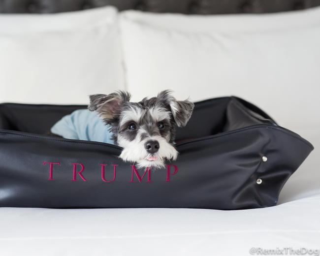 RemixTheDog - Trump Toronto Travel