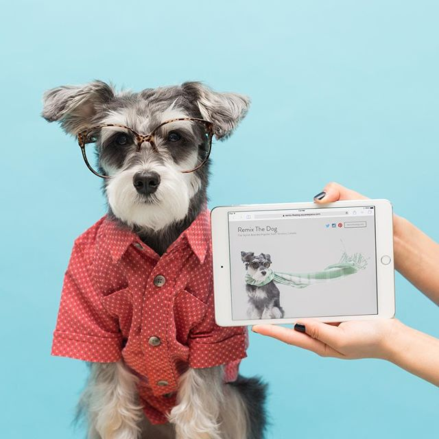 RemixTheDog - SquareSpace Cover Page