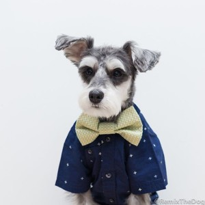 RemixTheDog - thelittlefellas bowtie review