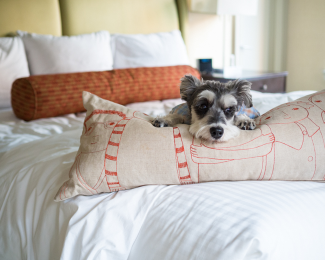 RemixTheDog - Affinia Hotel Shelburne NYC Pet Friendly Hotel Review