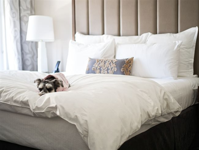 RemixTheDog - The Surrey Pet Friendly Hotel Review